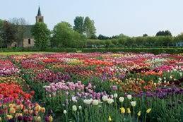 flower garden designs. Orange Flower Garden Design Calimesa, CA. Field Of Tulips, Hortus Bulborum Limmen, NL Designs