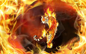 Fire And Ice Tigers - 2880x1800 ...