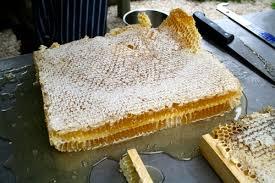 Αποτέλεσμα εικόνας για harvest honey