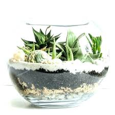 glass bowl plants image 0 in artificial succulent plant large succulents the eye catching creative decoration glass bowl plants
