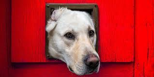 top 40 best dog doors for walls and doors