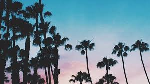 palm trees sunset tumblr. Palm Trees Sunset Tumblr . G