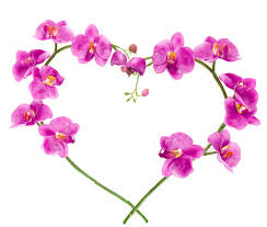 purple love flowers wallpapers wallpaperloves