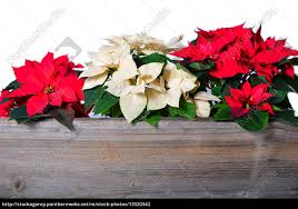 Stockfoto 13320342 Weihnachtsstern Holz Hintergrund