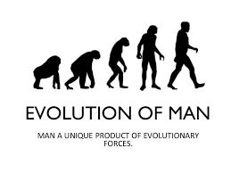 Ape Evolution Chart Evolution Of Man