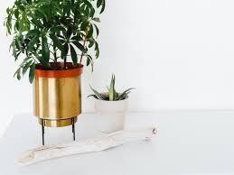 the best office desk. Creating The Best Office Desk - Greenery For Jockeys