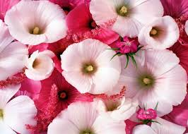 most beautiful flowers in the world hd wallpaper