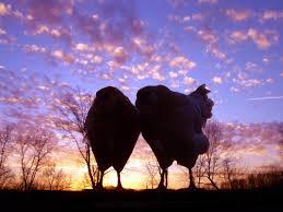 Kors Chicken Blog  BackYard ChickensBackyard Chicken Blog
