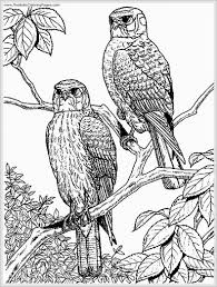 eagle coloring page with eagle coloring pictures philippine free colouring pages eagle coloring pages free printable archives best coloring page on printable coloring picture of an eagle