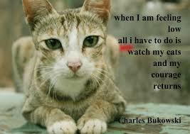 Beautiful Animal Quotes Best Of Animal Quotes Best Cute Animal Quotes With Cat Image