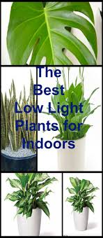 best low light office plants. Full Image For Chic Office Plants Fluorescent Light 149 Best Ideas About Low
