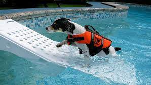 best dog pool ramp picks for your dogs