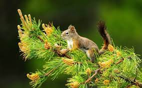 48+] Animal Nature HD Wallpapers on ...
