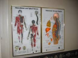 Used Visual Odyssey Neuropatholator Chiropractic Diagnostics For Sale Dotmed Listing 1100007