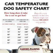 When Is It Ok To Leave Your Dog In The Car