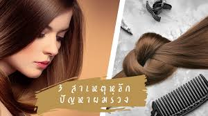 3 สาเหตหลกของปญหาผมรวง ปญหากวนใจของคนไทย ศยาสมนไพร