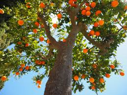 The Plants That Fruits Come From «TwistedSifterTree Bearing Fruit
