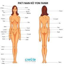 Media in category human female body. Anatomy Of The Body Female Anatomy Drawing Diagram