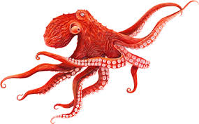 Image result for giant pacific octopus