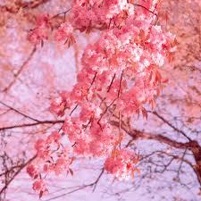 Fashion Wallpaper. Pink Flowers ...