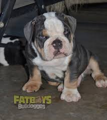 puppies for