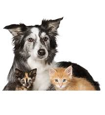 petsmart animals dogs. Delighful Animals One Dog With Two Small Kittens And Petsmart Animals Dogs G