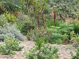 Small Picture 66 best Fynbos Succulent Water wise Garden ideas images on