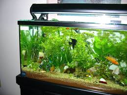 office fish. Office Design Fish Tank For Vastu