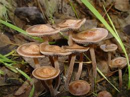 Florida Mushroom Identification Chart Magic Mushroom Guide