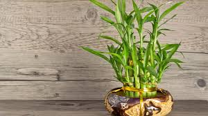5 Best Plants That Thrive In Your Bathroom - Plant Talk ...
