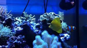 Stupendo acquario marino circa 150 litri hd youtube