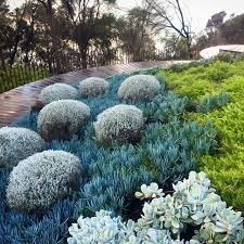 Small Picture 9 best Native gardens images on Pinterest Native gardens Garden