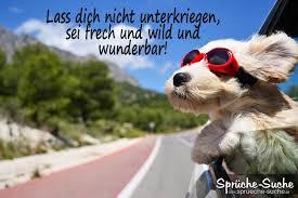 Aufmunternder Spruch Hund Mit Roter Sonnenbrille Sprüche Suche