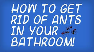 forum thread how to get rid of little black ants in your bathroom