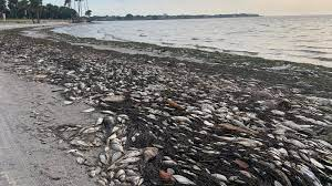 Red tide crisis: Pinellas families ...
