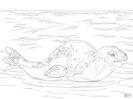 Small Picture Leopard Seal coloring page Free Printable Coloring Pages