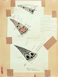 vladimir nabokov s scientific butterfly illustrations