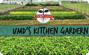 Kitchen Garden Blog Umds Kitchen Garden University Of Maryland Dining Services