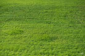grass texture hd. Green Grass Texture - High-quality Free Photo In Cattegory Textures / Backgrounds From FreeArtBackgrounds Hd L