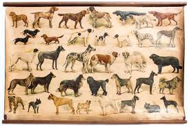 dog chart wall chart of dog breeds 1952