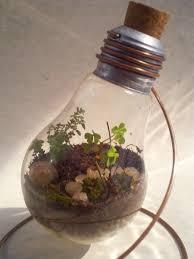 Terrarium Light Light Bulb Terrarium 29 04 11 By Kosmu On Deviantart