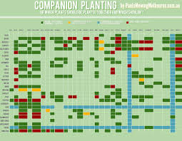 Plant Compatibility Vegetable Gardens Chart Companion Planting Visual Ly
