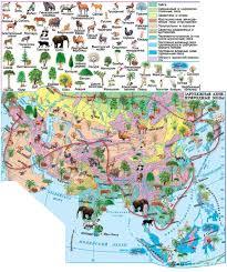 Особенности природных зон Евразии География Реферат доклад  Рис Природные зоны Азии