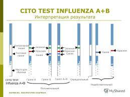 Презентация на тему Диагностика острых респираторных вирусных  19 cito test influenza a b Интерпретация результата Контрольная линия