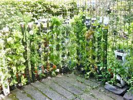 beginner vegetable garden layout vegetable gardening for
