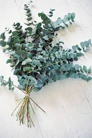 6 ways with eucalyptus in the home