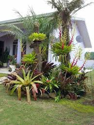 Small Picture Top 25 best Palm trees landscaping ideas on Pinterest