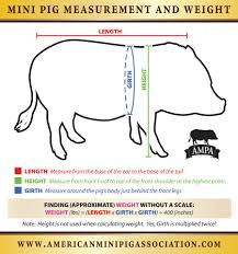 Weight And Measure Chart Mini Pig Measuring Chart American Mini Pig Online Store