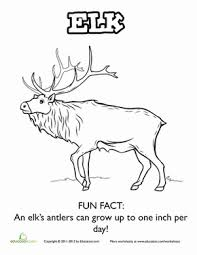 Small Picture Facts About Elk Worksheet Educationcom
