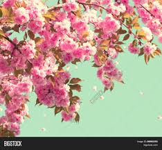 Spring Blossom Background Beautiful Nature Scene With Blooming Tree